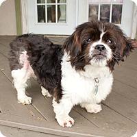 Adopt A Pet :: Rudy - Virginia Beach, VA