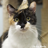 Adopt A Pet :: Sierra - Los Angeles, CA