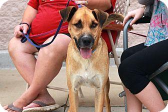 Shepherd (Unknown Type) Mix Dog for adoption in Rochester, Minnesota - Blinkin