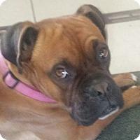 Adopt A Pet :: Gatsby - Reno, NV