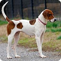 Adopt A Pet :: Zola - Atlanta, GA