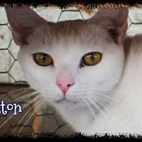 Adopt A Pet :: Cotton - Crandall, GA