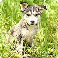 Adopt A Pet :: Tula - Auburn, CA