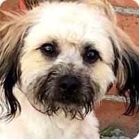 Adopt A Pet :: NAPOLEON (video) - Los Angeles, CA