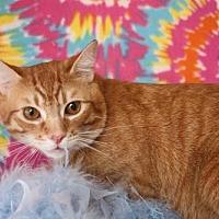 Adopt A Pet :: Symba - Phoenix, AZ