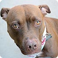 Adopt A Pet :: Miley (Courtesy Listing) - La Habra, CA