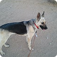 Adopt A Pet :: Candie - Victorville, CA