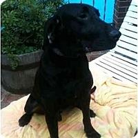 Adopt A Pet :: Auggie - Alexandria, VA
