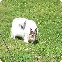 Adopt A Pet :: Cosmo - Abingdon, MD