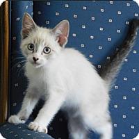Adopt A Pet :: Layne - Davis, CA