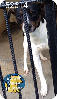 Terrier (Unknown Type, Small) Mix Dog for adoption in Boston, Massachusetts - Randy