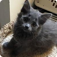 Adopt A Pet :: Aspen - McHenry, IL