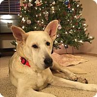 Adopt A Pet :: Sky - Tumwater, WA