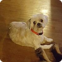 Adopt A Pet :: BarCelona - Elgin, IL