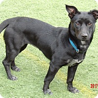 Adopt A Pet :: Skippy (20 lb) Fun Sweetie! - Williamsport, MD