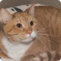 Adopt A Pet :: Reilly - Elmwood Park, NJ