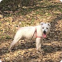 Adopt A Pet :: Wesley - Huntsville, AL