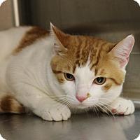 Adopt A Pet :: Tripp - Covington, LA
