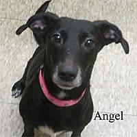 Adopt A Pet :: Angel - Warren, PA