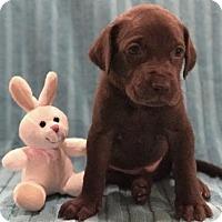 Adopt A Pet :: Titan - Denton, TX