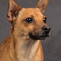 Adopt A Pet :: Canela - Davis, CA