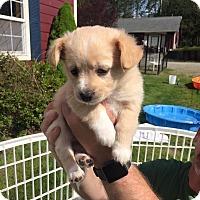 Adopt A Pet :: Tannis - Surrey, BC