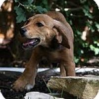Adopt A Pet :: Goldie - Staunton, VA