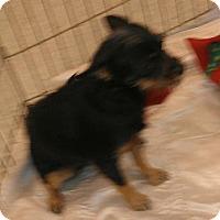 Adopt A Pet :: Jelly Bean - Phoenix, AZ
