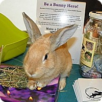 Adopt A Pet :: Cilantro - North Gower, ON