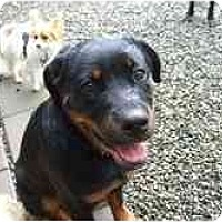 Adopt A Pet :: Zeke - Surrey, BC