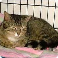 Adopt A Pet :: Molly - Warren, OH