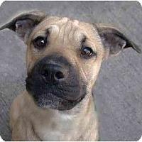 Adopt A Pet :: Margie - New York, NY