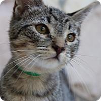 Adopt A Pet :: Archer - Santa Monica, CA
