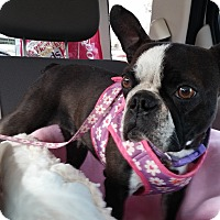Adopt A Pet :: Lovenia - Temecula, CA