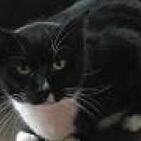 Adopt A Pet :: Princeton - Shelbyville, KY