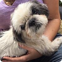 Adopt A Pet :: RUPERT - Los Angeles, CA
