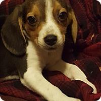 Adopt A Pet :: Lyric - Cleveland, OH