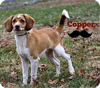 Beagle Mix Dog for adoption in Marion, Kentucky - Copper