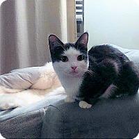 Adopt A Pet :: Ripley - Vancouver, BC