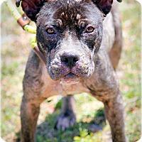 Adopt A Pet :: Esme - Ft. Lauderdale, FL