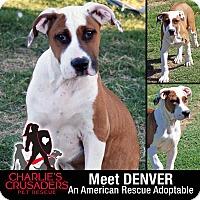 Adopt A Pet :: Denver - Spring City, PA