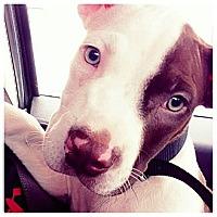Adopt A Pet :: Marcus - Lapeer, MI