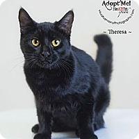 Adopt A Pet :: Theresa - Phoenix, AZ