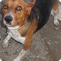 Adopt A Pet :: SNOOP DOG - Coudersport, PA