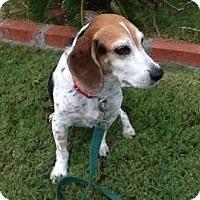 Adopt A Pet :: Hamlet - Phoenix, AZ