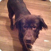 Adopt A Pet :: Cinnamon~Adopted! - Troy, OH