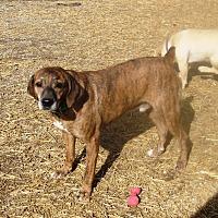 Adopt A Pet :: Kowalski - Columbia, KY