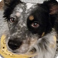 Adopt A Pet :: George - Midwest (WI, IL, MN), WI