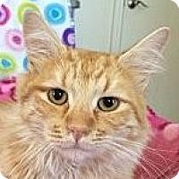 Adopt A Pet :: Simba - Winchester, CA