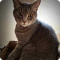 Adopt A Pet :: Tony&Bailey - Loveland, CO
